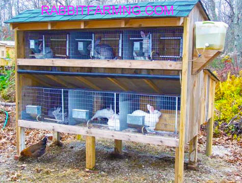 Nigerian Federal Government Engages 17,000 Youths In Rabbit Farming