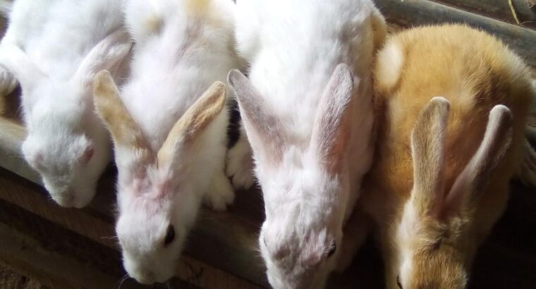 Starting A Profitable And Successful Rabbit Farm Business In Nigeria