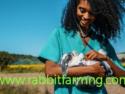 Common Rabbit Diseases In Nigerian Farms, Symptoms And Their Possible Treatments