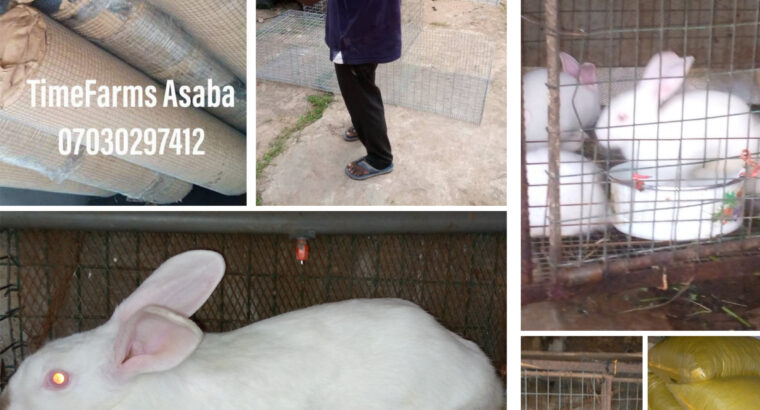 Newzealand white, Hyla, Rabbit feeds, rabbit cages